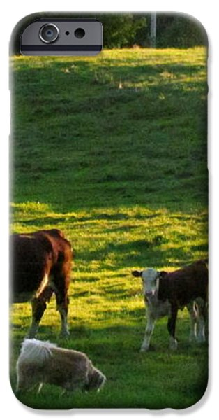 In the Field iPhone Case by Randi Shenkman