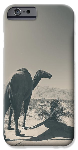 Camel Photographs iPhone Cases - In the Hot Desert Sun iPhone Case by Laurie Search