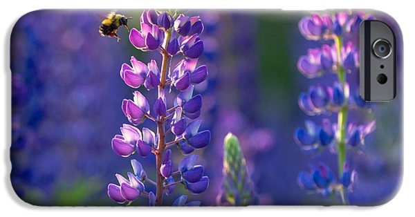 Fauna iPhone Cases - In The Land Of Lupine iPhone Case by Mary Amerman
