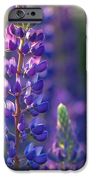 In The Land Of Lupine iPhone Case by Mary Amerman