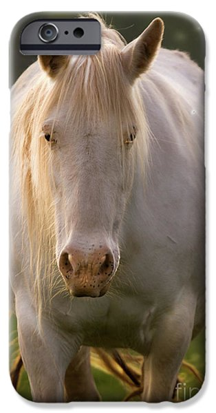 Unicorn Art iPhone Cases - In The Land Of  Unicorns iPhone Case by Angel  Tarantella