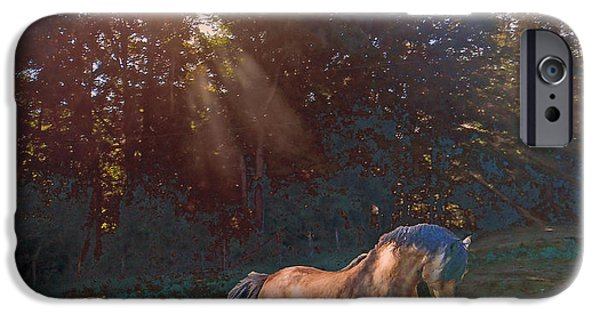 Paso Fino Stallion iPhone Cases - In The Light iPhone Case by Patricia Keller