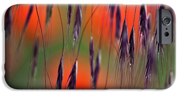 Hayfield iPhone Cases - In the Meadow iPhone Case by Heiko Koehrer-Wagner