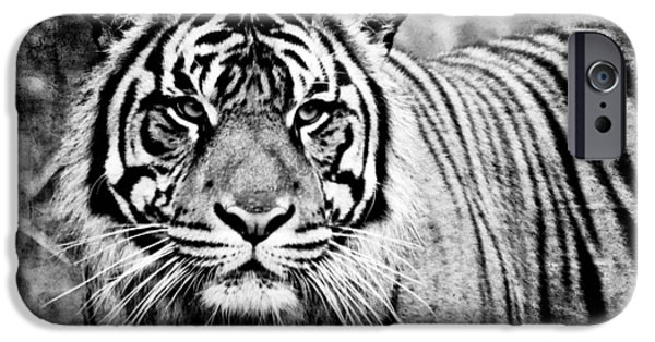 Bobcat And Kittens iPhone Cases - In The Midst Of A Tiger II iPhone Case by Athena Mckinzie
