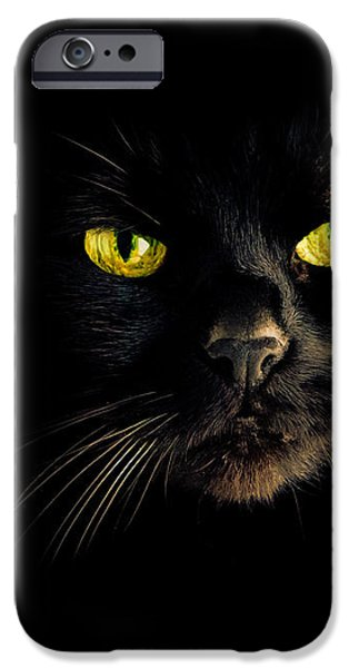 In the shadows One Black Cat iPhone Case by Bob Orsillo