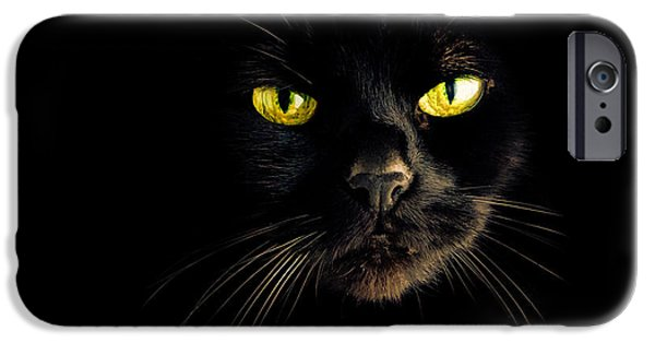 Bob Cats iPhone Cases - In the shadows One Black Cat iPhone Case by Bob Orsillo