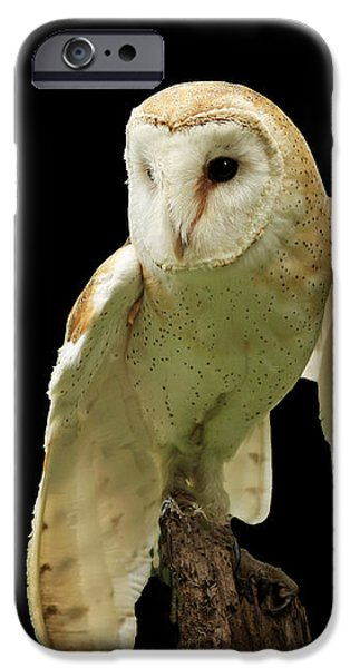 In the Still of Night Barn Owl iPhone Case by Inspired Nature Photography By Shelley Myke