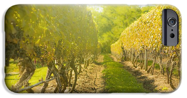 Grapevines iPhone Cases - In the Vineyard iPhone Case by Diane Diederich