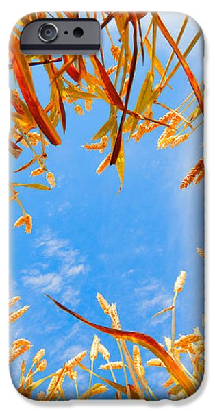 In the wheat iPhone Case by Alexey Stiop
