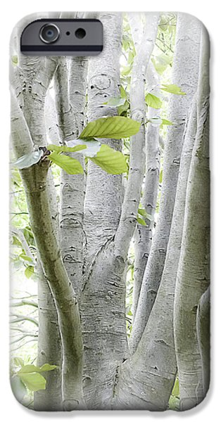 Nature Scene iPhone Cases - In The Woods iPhone Case by Julie Palencia
