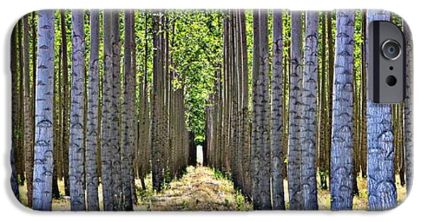 Pathway iPhone Cases - In the Woods iPhone Case by Michelle Calkins