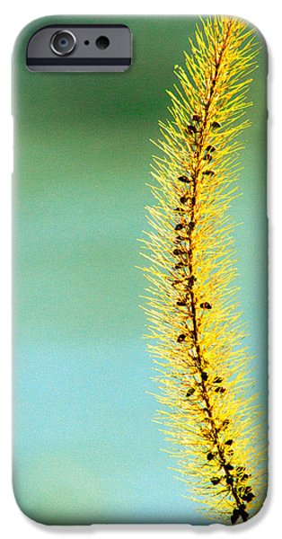 Plants Photographs iPhone Cases - In Time iPhone Case by Bob Orsillo