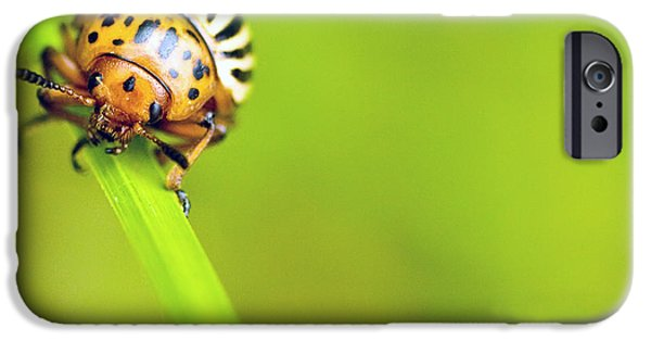 Insects Ceramics iPhone Cases - In Your Face iPhone Case by Don Powers