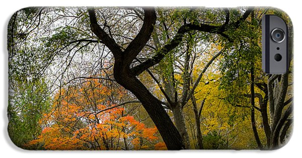 Freedom iPhone Cases - Independent Trees iPhone Case by Glenn DiPaola