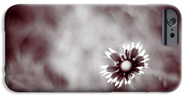Close Up iPhone Cases - Indian Blanket Flower iPhone Case by Darryl Dalton