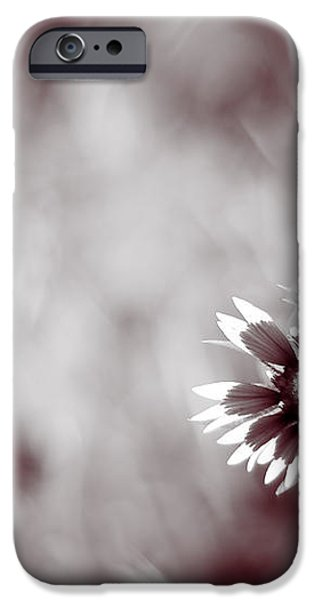 Indian Blanket Flower iPhone Case by Darryl Dalton