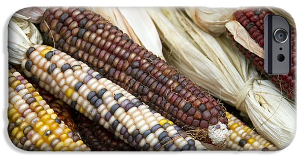 October iPhone Cases - Indian Corn 2 iPhone Case by Rebecca Cozart