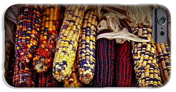 Fall Season iPhone Cases - Indian corn iPhone Case by Elena Elisseeva