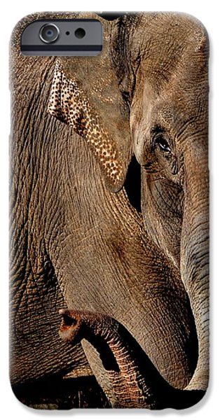 Elephants iPhone Cases - Indian Elephant iPhone Case by Deena Stoddard