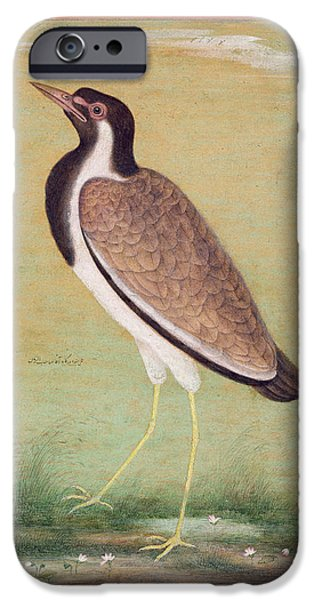 Animal Drawings iPhone Cases - Indian lapwing iPhone Case by Mansur