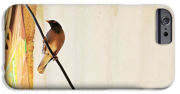 The Void iPhone Cases - Indian Myna comes to dinner iPhone Case by Kantilal Patel