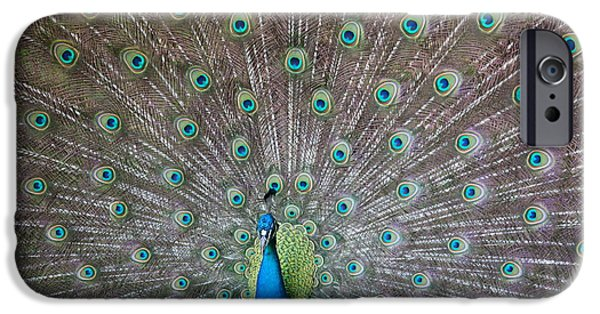 Peafowl iPhone Cases - Indian or Blue Peacock iPhone Case by Unknown