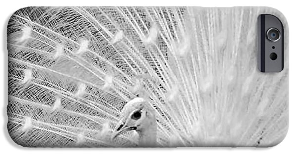 Innocence iPhone Cases - Indian Peafowl iPhone Case by Irfan Gillani