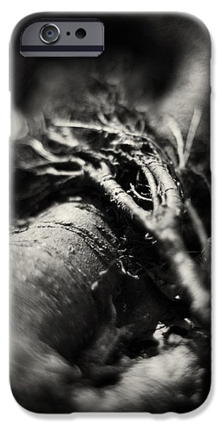 Tree Roots iPhone Cases - Infinity or Just Another Crazy 8 iPhone Case by Rebecca Sherman