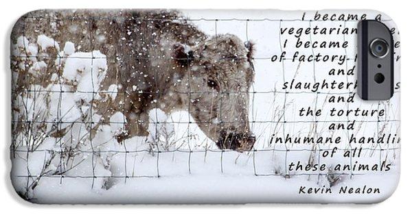 Temperament iPhone Cases - Inhumane Torture of Animals iPhone Case by Janice Rae Pariza