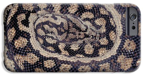 Burmese Python iPhone Cases - Inland Carpet Python  iPhone Case by Karl H Switak
