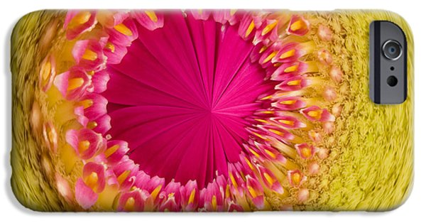 Nature Study iPhone Cases - Inner Gerbera iPhone Case by Anne Gilbert