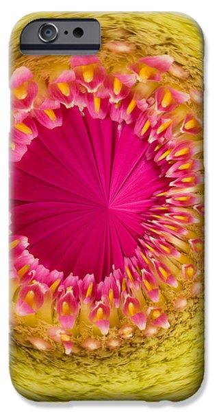 Inner Gerbera iPhone Case by Anne Gilbert