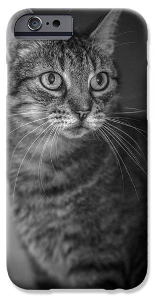 American Shorthair iPhone Cases - Innocence   iPhone Case by Anita Miller