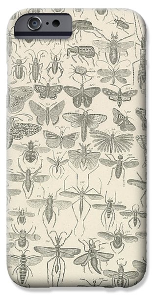 Insects Drawings iPhone Cases - Insects iPhone Case by English School