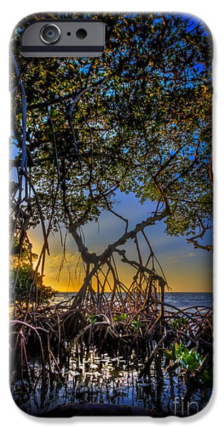 Bayou iPhone Cases - Inside Looking Out iPhone Case by Marvin Spates