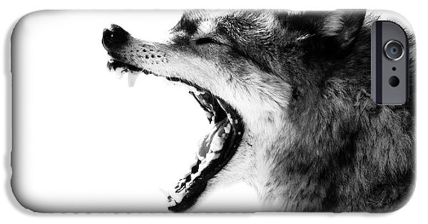 Wolf Photo iPhone Cases - Intense Gray Wolf Portrait  iPhone Case by Stephanie McDowell