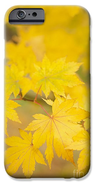 Intensely Yellow iPhone Case by Anne Gilbert