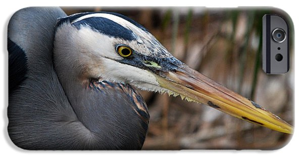 Photos Of Birds iPhone Cases - Intensity Of Purpose iPhone Case by Skip Willits