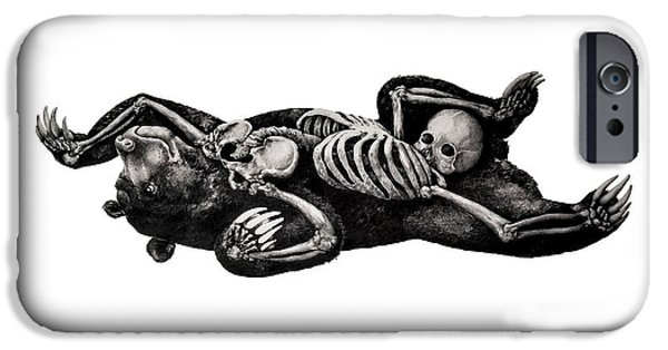 Skeleton Drawings iPhone Cases - Intertwined iPhone Case by Alexander M Petersen