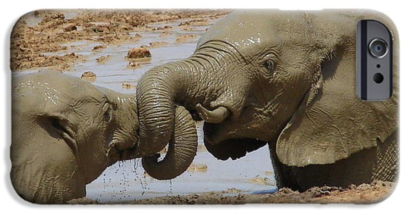 Wildlife Imagery iPhone Cases - Intertwined iPhone Case by Ramona Johnston