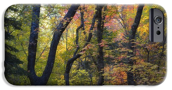 West Fork iPhone Cases - Intimate Forest iPhone Case by Peter Coskun