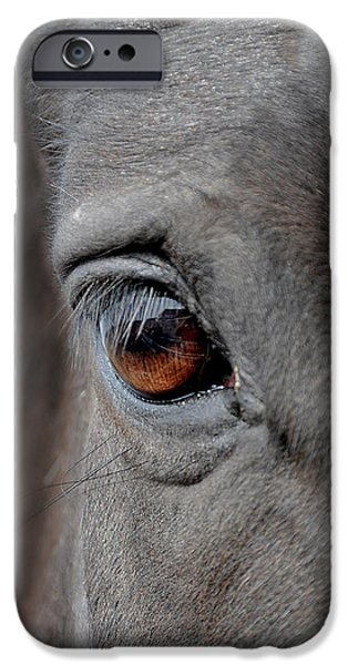 The Horse Photographs iPhone Cases - Into the Deep iPhone Case by Renee Forth-Fukumoto