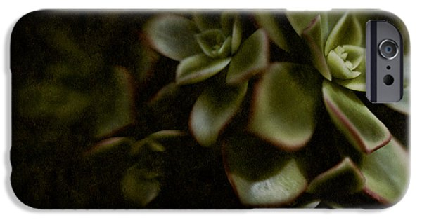 Rosette iPhone Cases - Into the Light iPhone Case by Venetta Archer