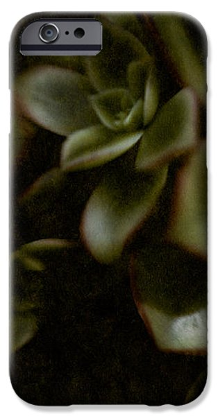 Into the Light iPhone Case by Venetta Archer