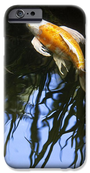 Koi iPhone Cases - Into the Rushes II iPhone Case by Rebecca Cozart
