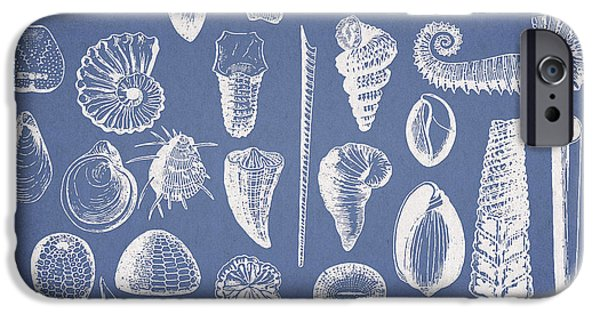 Invertebrates iPhone Cases - Invertebrates iPhone Case by Aged Pixel