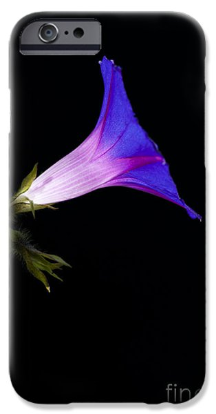 Ipomoea Morning Glory iPhone Case by Tim Gainey