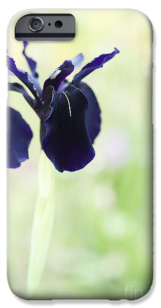 Anther iPhone Cases - Iris chrysographes Black Form iPhone Case by Tim Gainey