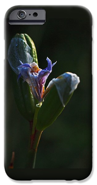 White Flowers iPhone Cases - Iris Emerging  iPhone Case by Rona Black