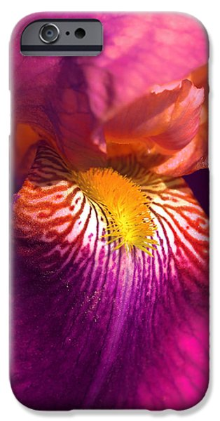 Yellow Bearded Iris iPhone Cases - Iris Flower Fuchsia Pink iPhone Case by Jennie Marie Schell